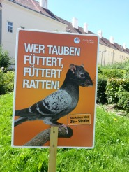 don't feed the birds_modern