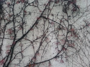 haiku 2014_vines